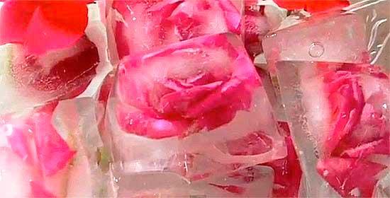 Ледяные кубики из роз.
