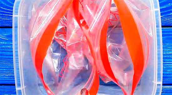 Пакеты и контейнер для заморозки.