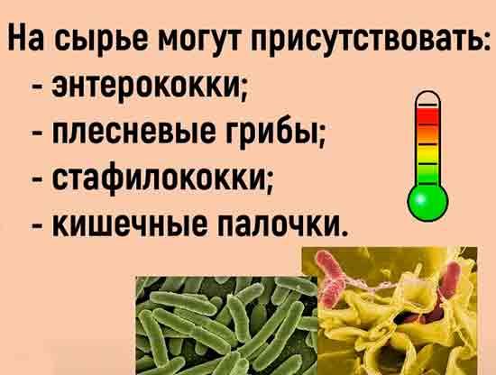 Mikrobyi_i_bakterii_pischevogo_proishozhdeniya_ne_boyatsya_holoda